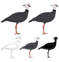 Tacha bird in profile view vector