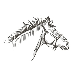 doodle horse vector image