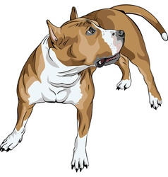 sketch of the dog vector image