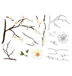 plum blossom flower outline vector image