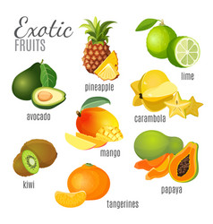 Exotic fruits avocado pineapple papaya vector