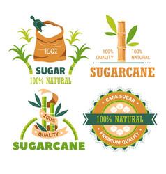 Sugar cane plantation farming and agriculture vector