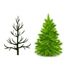 trees trunk and branched green Christmas tree vector image