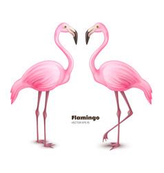 Realistic 3d pink flamingo set vector