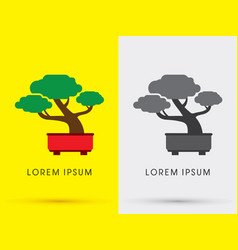 bonsai tree vector image vector image
