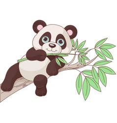 baby panda vector image vector image