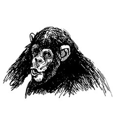 Hand sketch a young chimpanzee vector