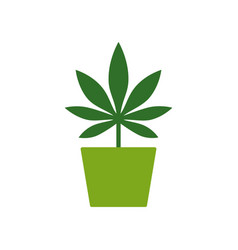 Marijuana or cannabis plant in a flower pot vector