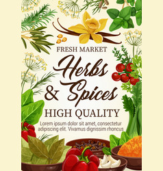 spices and herbs seasonings farm market vector image