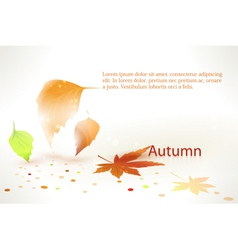 Abstract autumn leaves background vector