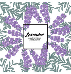 hand drawn background with lavender flowers vector image