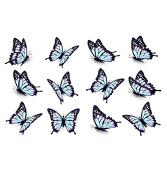 Set of blue butterflies flying in different vector image