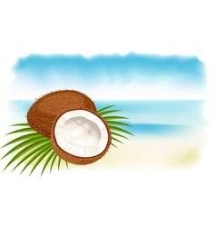 ripe coconuts vector image