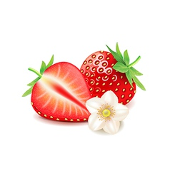 Strawberry and slice isolated on white vector image