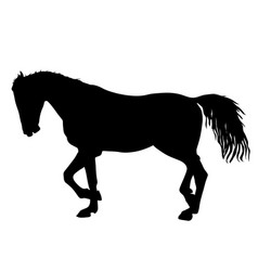 silhouette of black mustang horse vector image vector image