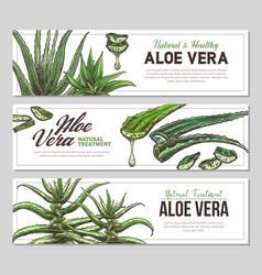 Aloe vera sketch vertical banners vector