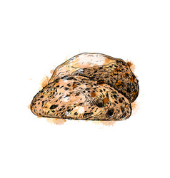 bread from a splash of watercolor vector image