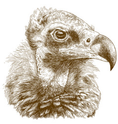 Engraving cinereous vulture vector