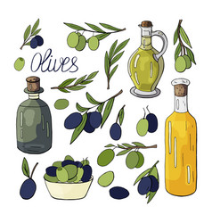 olive oil olives branches and olives isolated on vector image