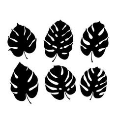 Botanical of monstera leaf vector