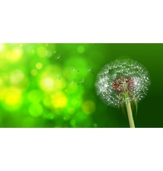 Dandelion on blurred green bokeh background vector image