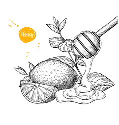 Honey with lemon and mint drawing wooden vector