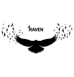image a silhouette a raven on a white vector image