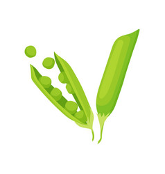 Two pods of green pea natural and healthy food vector