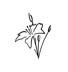 white lily ink drawing logo icon vector image