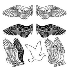 Dove bird wings set vector image