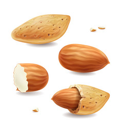almond nuts with shell isolated realistic vector image