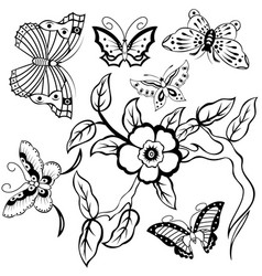 butterflies and floral branch vector image