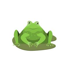 cartoon cute surprised green frog character vector image