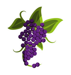 Fresh delicious grape fruit vector