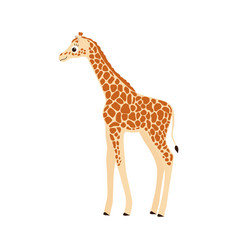 giraffe on white vector image