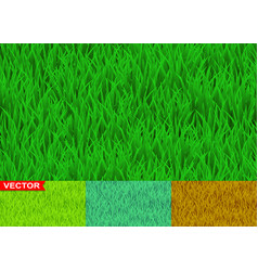 green and savanna grass seamless pattern vector image