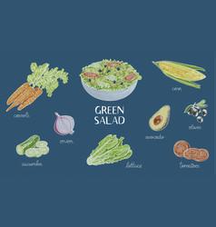 hand drawn green salad ingredients bowl of salad vector image