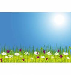 spring meadow with flowers vector image