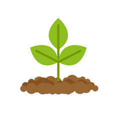 sprout grows from ground plants in soil vector image