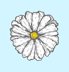 chamomile isolated on blue background simple vector image