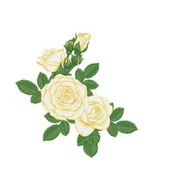 beautiful bouquet with white roses and leaves vector image