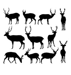deer isolated on white background vector image
