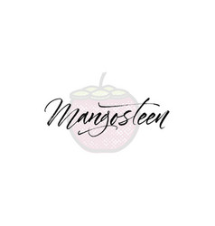 mangosteen word on background fruit vector image