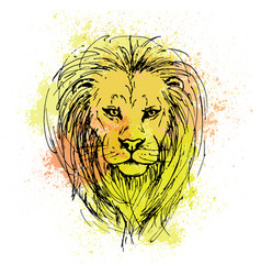 Sketch by pen of a lion head on a background of vector