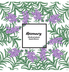 hand drawn background with rosemary flowers and vector image