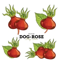 Dog-Rose Set vector image vector image