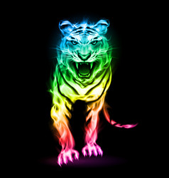 fire tiger in spectrum colors isolated on black vector image