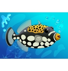 Cute Clown Trigger Fish in Cartoon Style on a vector image