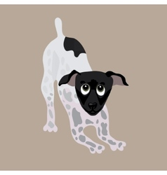 Japanese Terrier of a dog vector