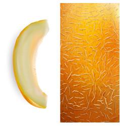 Slice melon vector